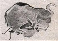 Bizon atacând în plin galop