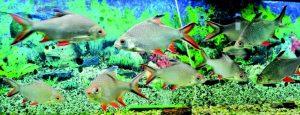 acvariul-din-constanta