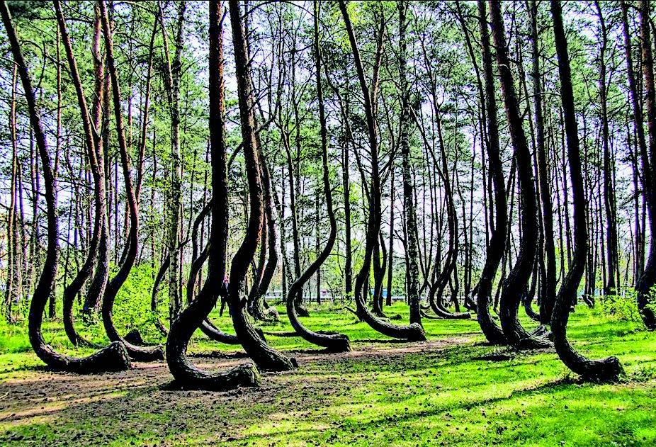 Pădurea Hoia Baciu